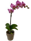 Single Purple Phalenopsis Orchid from Sharon Elizabeth's Floral Designs in Berlin, CT