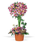 Alstroemeria Topiary from Sharon Elizabeth's Floral Designs in Berlin, CT